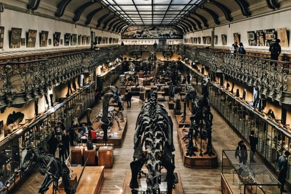 The True Costs of Collecting – Museums, Climate, and Carbon